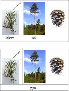 Här är ett material om svenska träd. Det översta kortet är ett kontrollkort. Det understa kortet ska man klippa isär det till fyra kort som barnet sedan ska sätta ihop.De träd som är med i materialet…