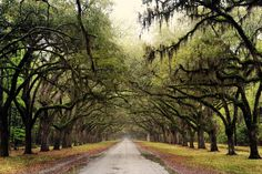 Travel.. Windslow Plantation outside Savannah GA