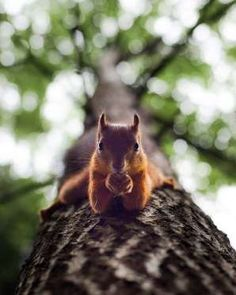 wildlands-animal-photography-joachim-munter-finland-29-5a43ad8ef0329__880 - K Dijital Medya A.S. tarafından sağlanmıştır