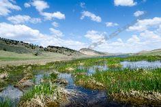 Spring Pond  Pond Landscape Natural Backyard by EagleEyeOriginals, $30.00