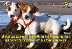 A dog can express more with his tail in minutes than his owner can express with his tongue in hours. —Unknown