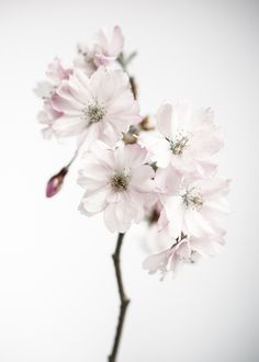 Ancient blossom No.1