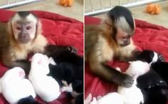 Monkey Meets Puppies And It's Just As Cute As You'd Think
