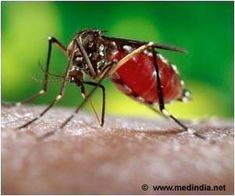 Rise in Temperature Induces Key Changes in Dengue Virus When It Enters Human Body
