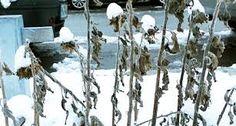 Bildergebnis für balkon herbst winter