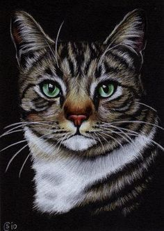 images of cat paintings - Google Search