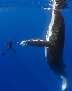 Whale high five  uh yeah im pretty sure that high-fiving a whale is on my bucket list now.