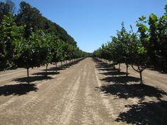 perth kooralbyn orchard and asparagus farm