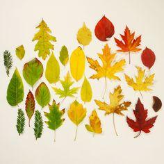 Fall Leaves <3