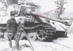 Tiger im Focus - Ergänzung zur Gallerie  503 Ungarn/Hungary