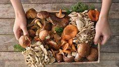 Healthy living at home sacramento california jobs opportunities Health Benefits Of Mushrooms, Mushroom Benefits, Edible Mushrooms, Stuffed Mushrooms, How To Store Mushrooms, Plant Based Meal Delivery, Hungarian Mushroom Soup, Portobello Mushroom Burger, Mushroom Varieties