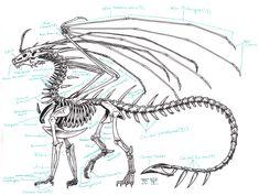 dinosaurs anatomy - Buscar con Google