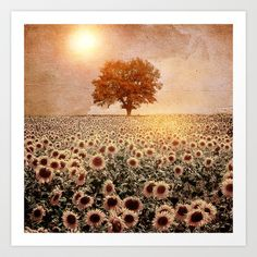 lone tree & sunflowers field (colour option) Art Print by Viviana Gonzalez - $19.95 http://society6.com/product/lone-tree--sunflowers-field-colour-option_print?curator=SylviaCookPhotography