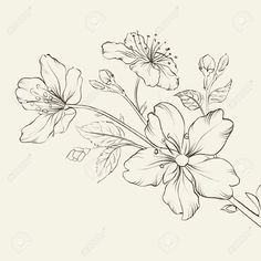 Calligraphy Cherry Blossom. Vector Illustration. Royalty Free Cliparts, Vectors, And Stock Illustration. Image 25866877.