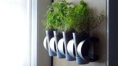 Turn an IKEA Wine Rack Into a Wall-Mounted Herb Garden