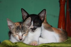 My Cats<3