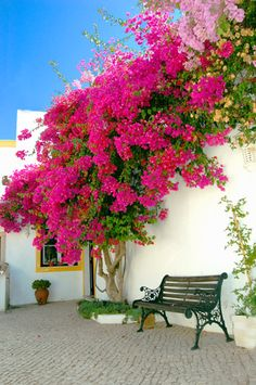 Rio Arade Algarve Manor House in The Algarve, Portugal – Lonely Planet - Garden Deko Beautiful Gardens, Beautiful Flowers, Beautiful Places, Flowers Perennials, Planting Flowers, Algarve, Garden Inspiration, Garden Landscaping, Garden Design