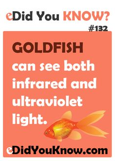 Goldfish can see both infrared and ultraviolet light. http://edidyouknow.com/did-you-know-132/