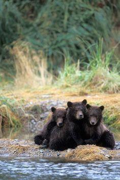 Bear Country: North America's Grizzly, Black and Polar Bears by Steve Kazlowski