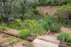 A Perfumer's Garden in Grasse // RHS Chelsea Flower Show // Gold // Designed by: James Basson; Built by: Peter Dowle; Sponsored by: L'Occitane
