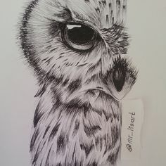 owl sketch by on DeviantArt Owl Tattoo Drawings, Pencil Art Drawings, Animal Drawings, Drawing Sketches, Cool Drawings, Owl Art, Bird Art, Tatoo Brothers, Tatoo Bird