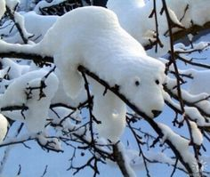 A great snow sculpture in a tree... love it!