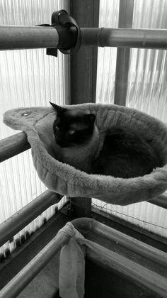 My cat Morris Cats, Animals, Gatos, Animales, Animaux, Animal, Cat, Animais, Kitty