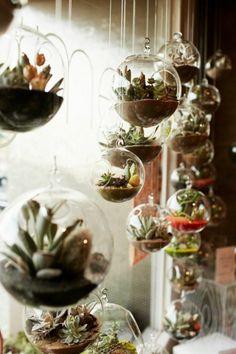 terrarium plantes grasses, diy décoration, terrarium succulente, boule en verre à suspendre