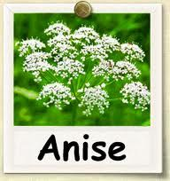 Image result for aniseed plants