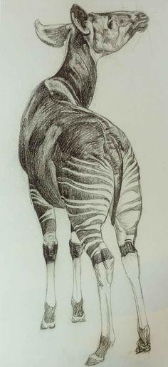 Okapi by Raymond Sheppard