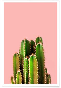 Cactus Time als Premium Poster door cafelab   JUNIQE
