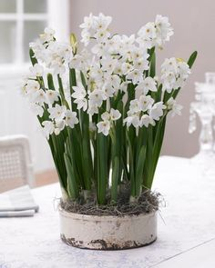 Gardening Autumn - All About Paperwhites - With the arrival of rains and falling temperatures autumn is a perfect opportunity to make new plantations Winter Flowers, Spring Flowers, Planting Bulbs, Planting Flowers, Flower Plants, Flowers Garden, Cactus Flower, Daffodil Flower, Bulb Flowers