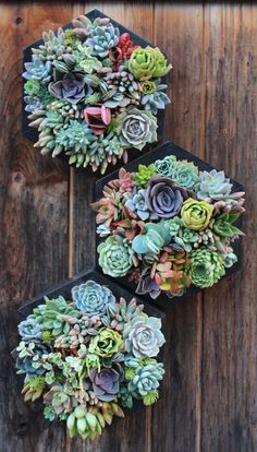 Stunning Vertical Garden for Wall Decor Ideas Do you have a blank wall? the best way to that is to create a vertical garden wall inside your home. A vertical garden wall, also called… Continue Reading → Types Of Succulents, Hanging Succulents, Succulent Arrangements, Cacti And Succulents, Hanging Planters, Cactus Plants, Vertical Garden Plants, Succulent Gardening, Vertical Gardens