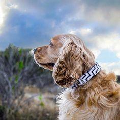 Chevron Dog Collar - Grayscale Chevron Dog Collar - Adjustable dog collar - black and white dog collar - boy dog collar