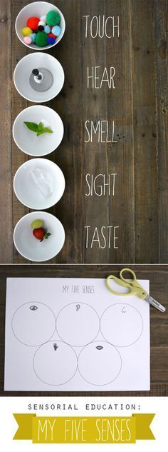 Zintuigen My Five Senses (+ printable). Simply by being thoughtful about what children touch, hear, see, and smell during a learning experience, we can turn an ordinary lesson into lasting memory. Five Senses Preschool, 5 Senses Activities, My Five Senses, Preschool Science, Montessori Activities, Science For Kids, Science Activities, Classroom Activities, Preschool Activities