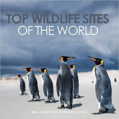 Will Burrard-Lucas has spent 10 years taking photographs for his book 'Top wildlife sites of the world'. He travelled around the world visiting places including Zambia, Peru, and the Falklands Islands. Wildlife Photography, Travel Photography, Game Reserve, Wildlife Nature, What Is Like, Travel Around The World, Great Photos, Habitats, Places To See