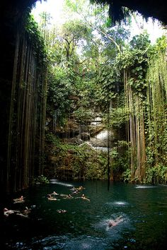 Ik Kill Cenote, Mexico, // I was there! so cool.