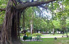 """""""Parque da Jaqueira"""".  #Recife. Estado de Pernambuco, Brasil."""