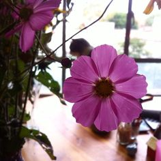 tere´s flower