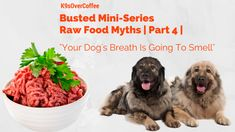 """5 Myths About Raw Feeding 