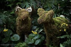 A pair of life sized deer made of moss at the Conservatory on the Biltmore Estate in Asheville North Carolina. @camillacalnanphotography @biltmoreestate #moss #mossart #mosscreations #deer #conservatory #biltmoreestate #Asheville #nc #visitasheville #visitnc #828isgreat #liveavl #ashvibes #travelnc #igersnc #wonderful_places #magic__photography #visual_magic #chasinglight #nikontop #nikonphotography #nikon_photography_ #wanderlust #letsgosomewhere #finditliveit #ashevillephotovideo…