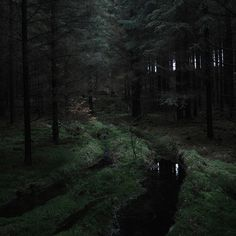 Your source for all of your nope-filled forest needs. Images, gifs or music, all to set the mood. Dark Green Aesthetic, Nature Aesthetic, Twilight, Slytherin Aesthetic, 3d Fantasy, Tumblr Wallpaper, Nocturne, Nature Photography, Photography Tips