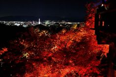 "京都・清水寺 紅葉ライトアップ Kiyomizu-dera Temple Koyo Light up,Autumn leaves/Fall foliage ""Koyo"" in KYOTO,Japan"