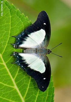 ~butterfly~  #black  #white