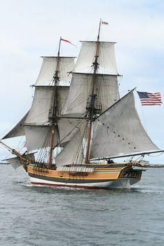 Pirate's Lady