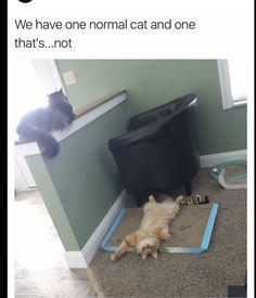 Funny Random Phone Meme Dump - Imgur