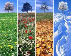 Changing Seasons Changing seasons are our guide to change, Dynamism conquering the static boredom. Four Seasons Art, Seasons Of The Year, Season Calendar, Weather Seasons, Montessori Materials, Science And Nature, Beautiful Landscapes, Plants, Photos