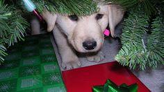 Capodanno per cani e gatti: contro i botti decalogo OIPA e Fiori di Bach - http://www.gattisinasce.it/forum/topic.asp?TOPIC_ID=84