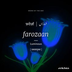 Bebo u my farozaan Urdu Words With Meaning, Hindi Words, Urdu Love Words, New Words, Hindi Quotes, Unusual Words, Rare Words, Unique Words, Cool Words