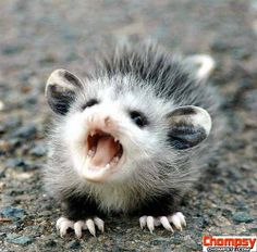 misc angry animal Funny Picture